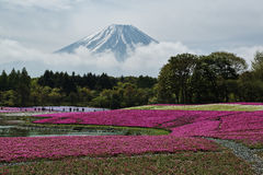 Fuji mountain at Japan Stock Image