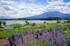 Fuji Mountain at lake Kawaguchi, Japan royalty free stock image