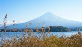 Fuji Mountain. Fuji Mountain at Lake Kawaguchiko, Fuji Mountain of Japan Stock Image