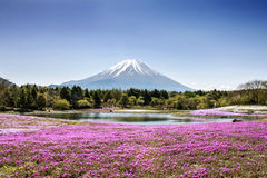 Fuji mountain. And pink moss phlox royalty free stock photography