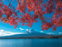 Fuji mountain with red maple leaf and tourism on boat in the lake. Fuji mountain with red maple leaf and the fishermen are fishing on the boat with many tourism Royalty Free Stock Image