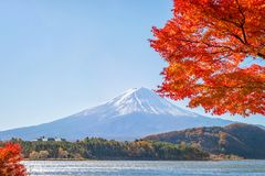 Fuji mountain and red maple trees. Fuji mountain and red maple trees at lake Kawaguchiko, Japan royalty free stock photography