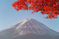 Fuji mountain and red maple trees. Fuji mountain and red maple trees at lake Kawaguchiko, Japan royalty free stock photos