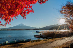 Fuji mountain. Red maples and Fuji mountain Royalty Free Stock Photography