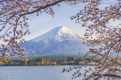 Fuji Mountain and Sakura Tree with Yacht Pier at Kawaguchiko Lake. Sakura with Fuji Mountain at Kawaguchiko Lake in Spring. Kawaguchiko Lake is the most famous royalty free stock photography
