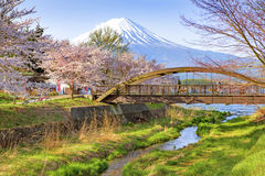 Fuji Mountain and Sakura Trees Stock Images