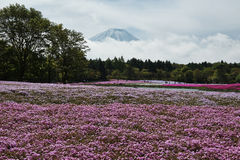 Fuji mountain at Tokyo. Japan Tokyo and Fuji Mountain Royalty Free Stock Photo