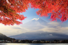 Fuji Mountaion with nice maple Royalty Free Stock Image