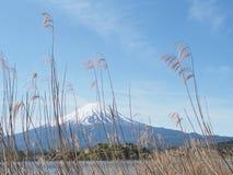 Fuji mt Foto de Stock