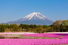 Fuji Mt mit Moosflammenblumefeld Stockfotos