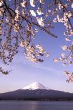 fuji mt sakura стоковое изображение