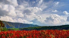 Fuji och blommor Royaltyfria Bilder