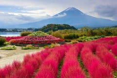Fuji at Oishi Park Royalty Free Stock Photography