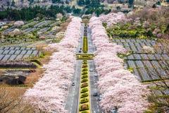 Fuji Reien Cemetery Royalty Free Stock Photo