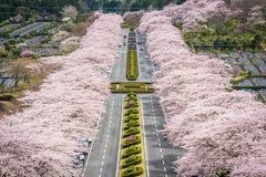 Shizuoka Japan Spring. Fuji Reien Cemetery, Shizuoka, Japan in spring Stock Photos