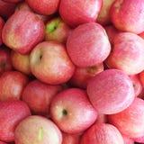 Fuji rojo Apple Imágenes de archivo libres de regalías