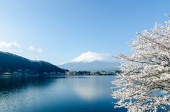 Fuji-san con Cherry Blossoms en el lago Kawaguchiko, Japón Foto de archivo