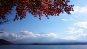 Fuji-san sotto l'albero Immagini Stock Libere da Diritti