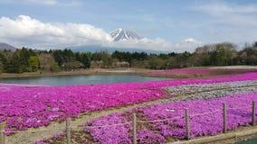 Fuji ShibaZagura festival Arkivbilder