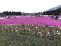 Fuji Shibazakura Fastival Royaltyfria Foton