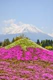 Fuji Shibazakura Fastival, Fujikawaguchiko, Minamitsuru Yamanashi, JAPÃO Fotos de Stock Royalty Free