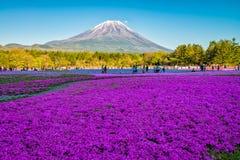 Fuji Shibazakura festival royaltyfri foto