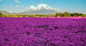 Fuji Shibazakura w Japonia Zdjęcia Royalty Free