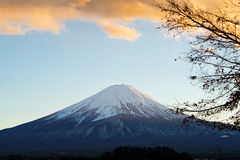 Fuji before sunset. Focused on Fuji Mountain before sunset with dried tree Royalty Free Stock Photos