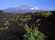 Fuji van MT Royalty-vrije Stock Afbeelding
