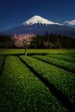 Fuji z Śliwkowym okwitnięciem i zieloną herbatą Zdjęcia Stock