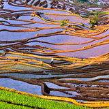 Fujian joint terraced Stock Images