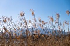 Fujiberg en Kawaguchiko-meer met wolk stock fotografie