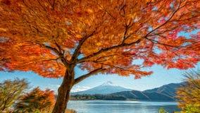 Fujiberg en mooie esdoornboom bij meer Kawaguchiko Royalty-vrije Stock Foto