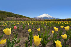 Fujiberg en Tulip Garden bij Hananomiyako-Bloemtuin dichtbij Yamanaka-Meer Stock Fotografie
