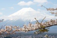 Fujiberg in Japan als achtergrond met sakurabloesem stock afbeelding