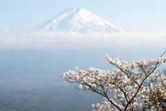 Fujiberg in Japan als achtergrond met sakurabloesem royalty-vrije stock fotografie