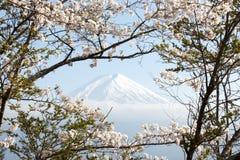 Fujiberg in Japan als achtergrond met sakurabloesem royalty-vrije stock foto