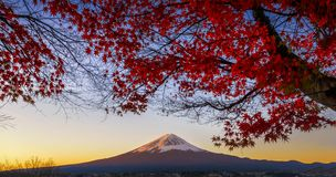 Fujiberg met Rode Esdoornboom in Autumn Morning Twilight bij Kawaguchiko-Meer stock foto