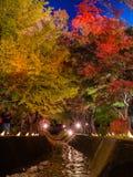 Fujikawaguchiko Autumn Leaves Momiji Festival. Light up at maple corridor for Fujikawaguchiko Autumn Leaves Momiji Festival event near Lake Kawaguchi in royalty free stock image