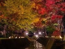 Fujikawaguchiko Autumn Leaves Momiji Festival. Light up at maple corridor for Fujikawaguchiko Autumn Leaves Momiji Festival event near Lake Kawaguchi in royalty free stock photo