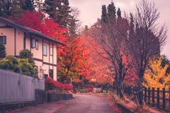 Autumn street in Fujikawaguchiko, Japan. Fujikawaguchiko, Japan -November 9, 2018: Autumn street in the evening at Fujikawaguchiko, a Japanese resort town on the royalty free stock photo