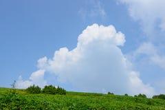 Fujimidai高地在长野/岐阜,日本 免版税库存图片