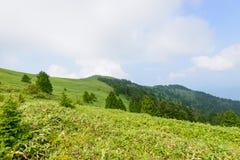 Fujimidai högland i Nagano/Gifu, Japan Arkivfoton