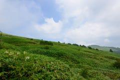 Fujimidai-Hochland in Nagano/in Gifu, Japan Lizenzfreie Stockfotos