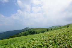 Fujimidaihoogland in Nagano/Gifu, Japan Stock Foto's