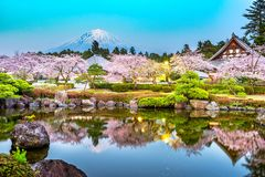 Fujinomiya, Shizuoka, Japan mit Mt Fuji und Tempel im Frühjahr lizenzfreie stockbilder