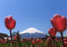 Fujisan Stockbilder