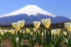 Fujisan Stockfotografie