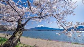 Fujisan berg med den körsbärsröda blomningen i våren, Kawaguchiko sjö, Japan Arkivfoton