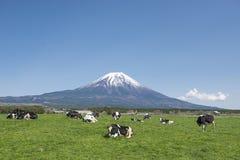 Fujisan en Koeien Stock Foto